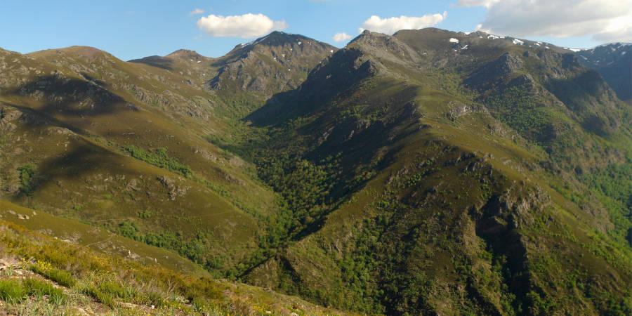 El Teixadal de Casaio ocupa una pequeña parte de un valle de los Montes de Trevinca, en Valdeorras (Ourense)