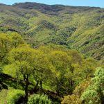 Un bosque único en el corazón del Courel