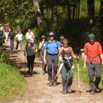 Un grupo de personas camina por un sendero boscoso, junto a un hito del Camino de Santiago